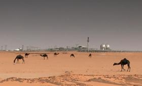 Thumb_Camels